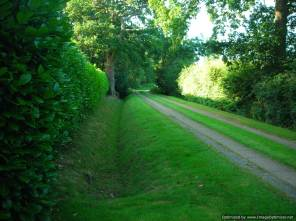 Beautifully strimmed ditch and mowed verges...