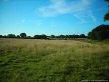 More horse pasture